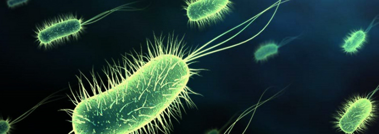 Бактерии в простате как попали