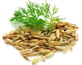 Семена укропа в лечение простатита
