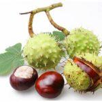 Каштан при лечении простатита: полезные свойства и рецепты